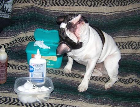 Ear Infections In Dogs How To Clean And Treat Ear