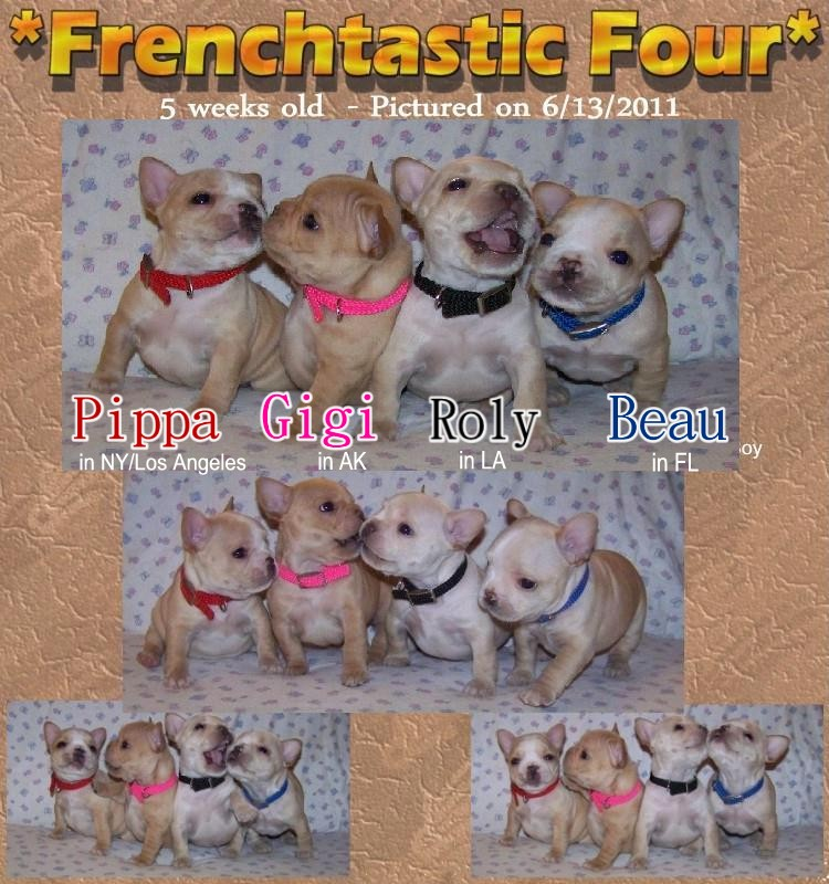 French Bulldog Puppies - French Bulldog Breeders - All Star French Bulldogs - AKC French Bulldogs