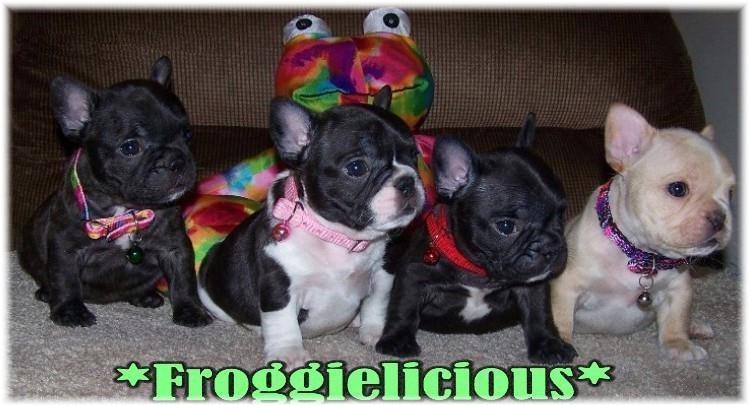 Why French Bulldogs Cost So Much