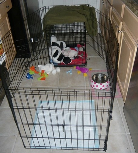 Crate Training Your Puppy French Bulldogs Crate Training