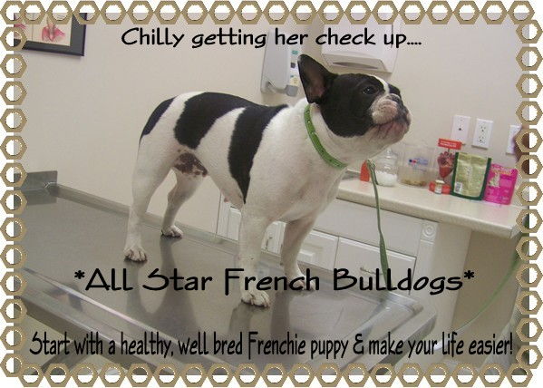 French Bulldog Health Health Concerns For French Bulldogs