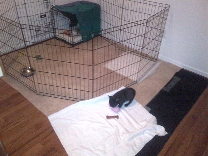 Puppy Playpen With Floor Puppy Playpenwhat To Do